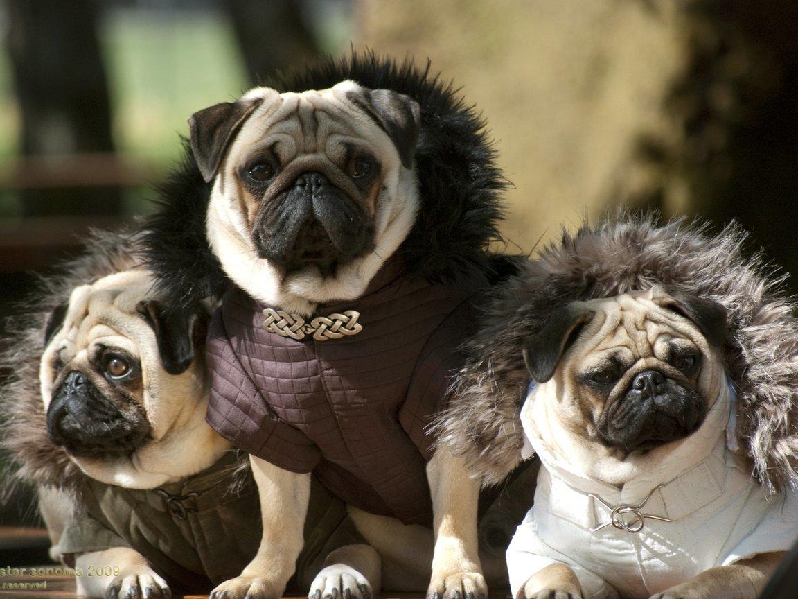 Рождением дочери, веселые картинки собак разных пород