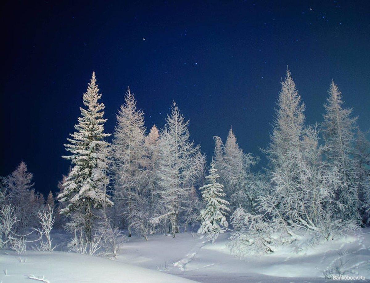 фото в лесу ночью зимой свои впечатления