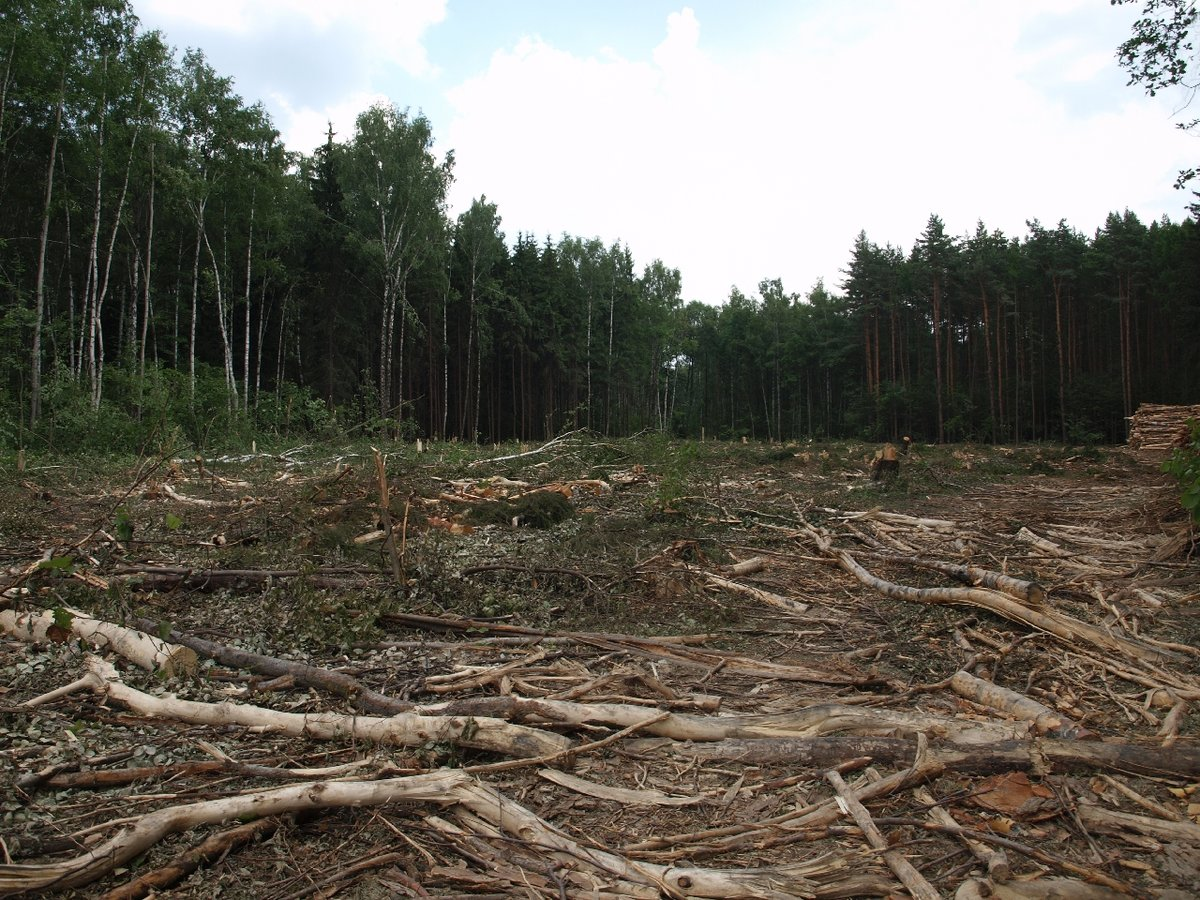 лес под строительство