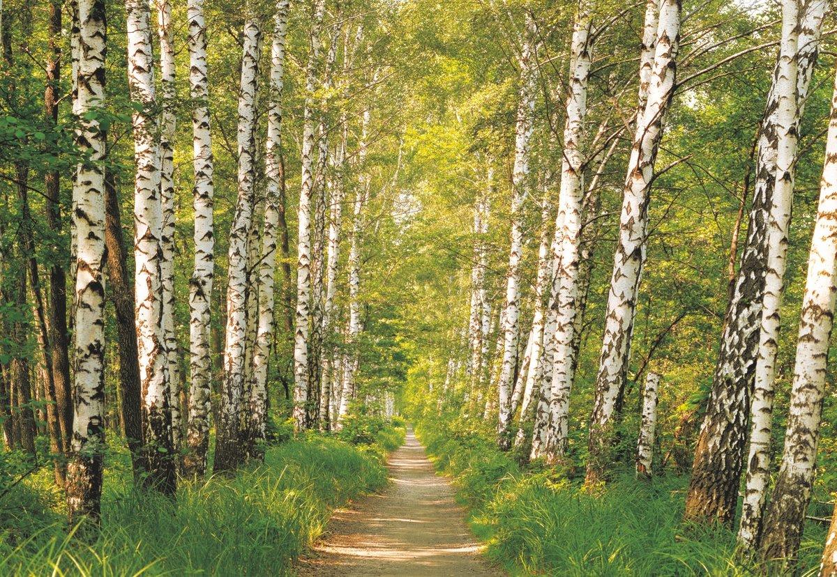 Поздравления, открытка лес картинки