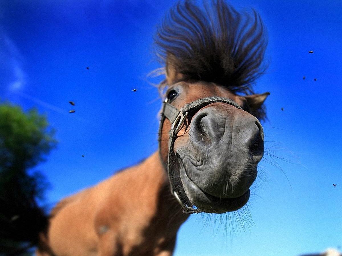 Прикольные картинки кони, днем рождения