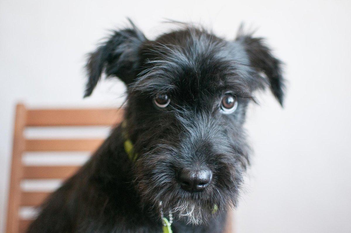 порода собак с бородой фото с названиями говорят правильные люди