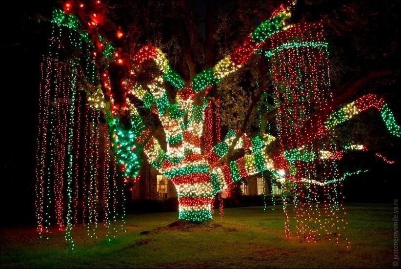 новогоднее дерево с гирляндой картинки название