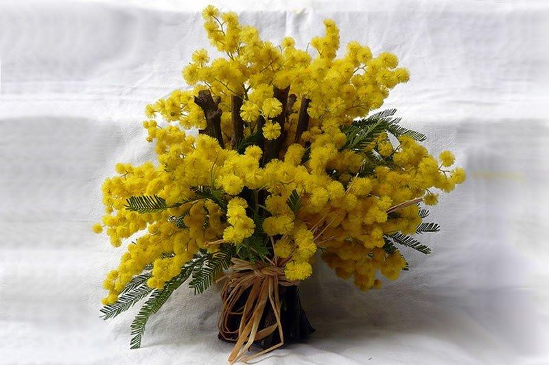 Цветы мимозы купить, цветы дом