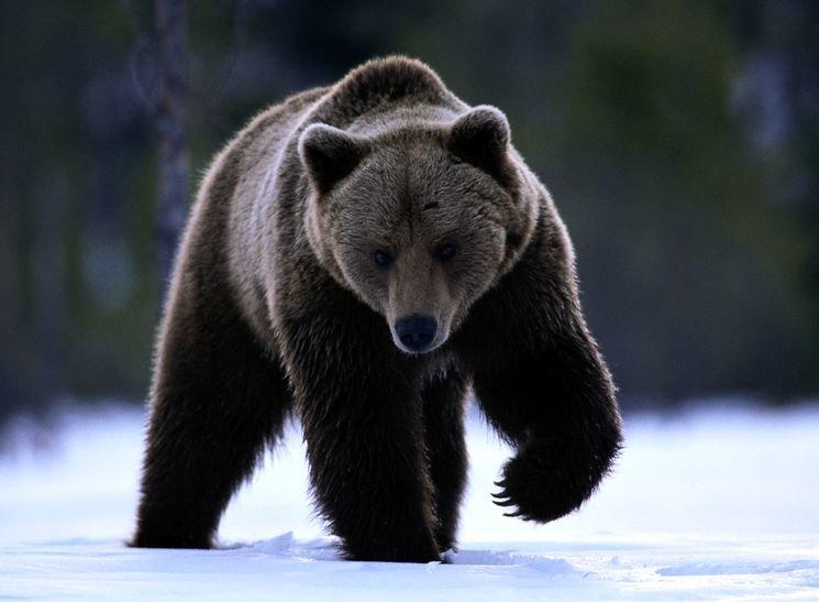 Медведь - одно из ÑÐ°Ð¼Ñ‹Ñ Ð¾Ð¿Ð°ÑÐ½Ñ‹Ñ Ð¶Ð¸Ð²Ð¾Ñ'ныÑ