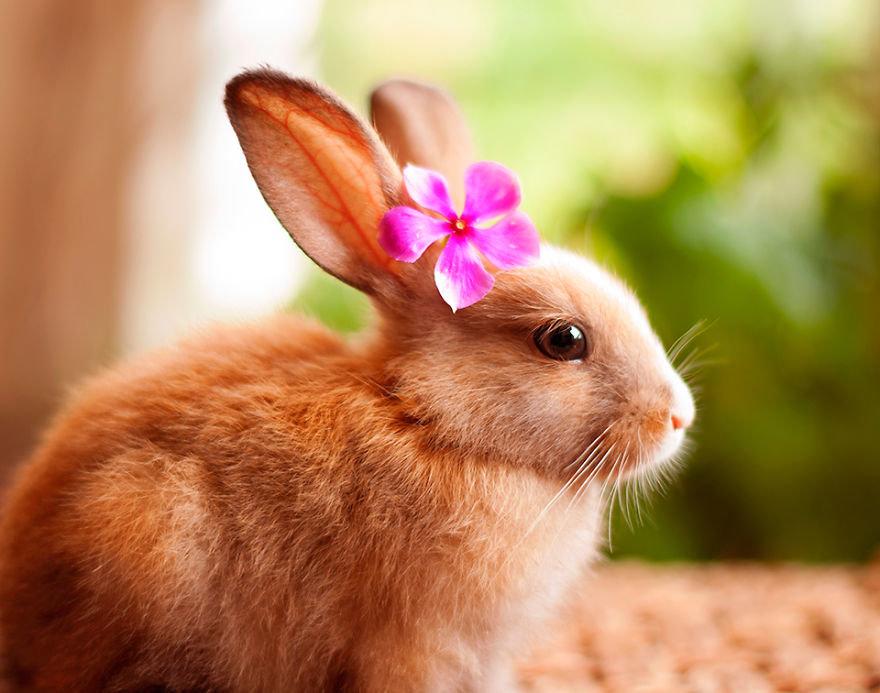 Картинки с кроликами фото, рисунки дверь