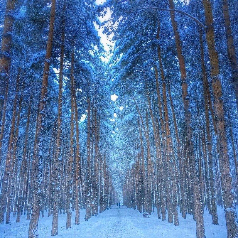 Живые картинки зима в лесу
