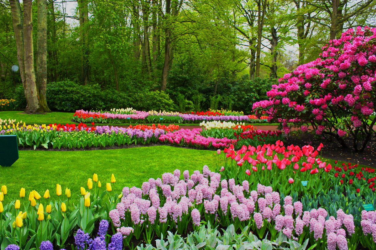 Картинки цветы сада