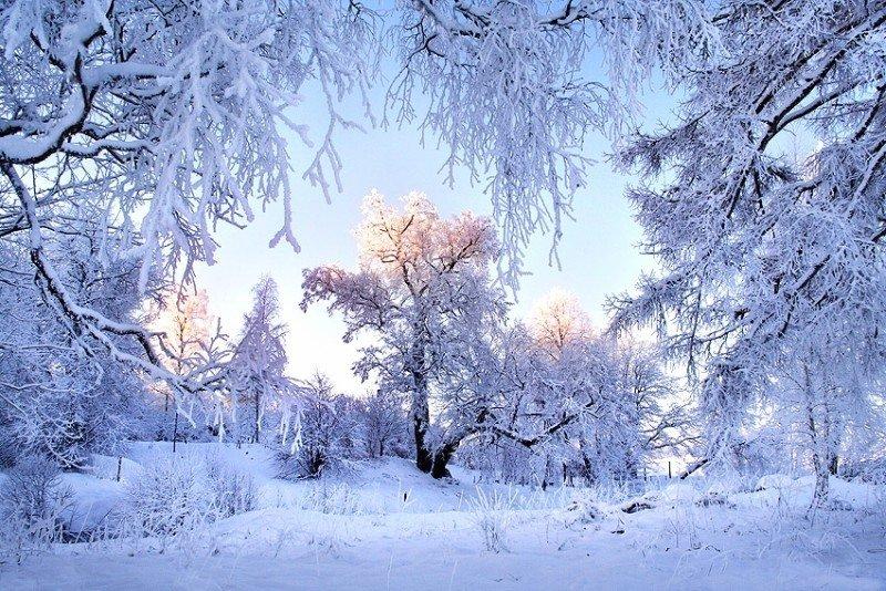 Картинки, картинка зимний лес анимация