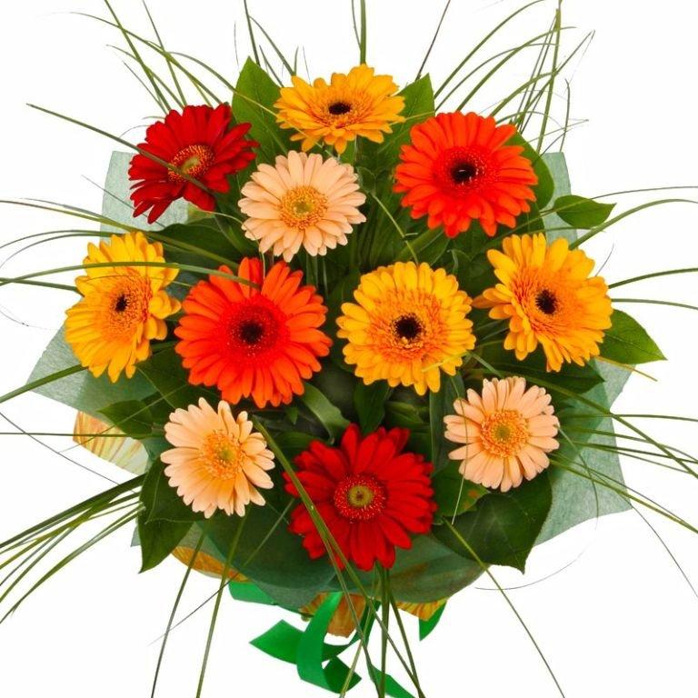 Купить цветы гербера, розы