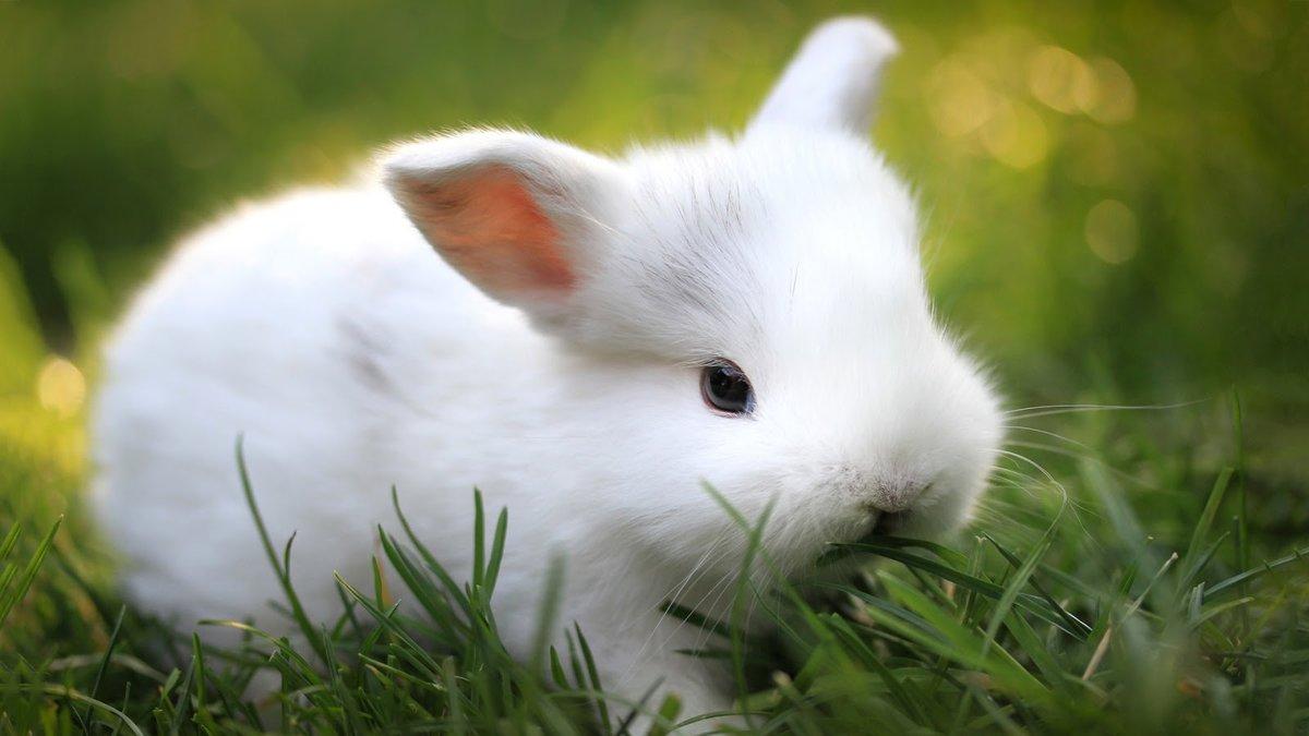 Открытка белый кролик, приколы картинках
