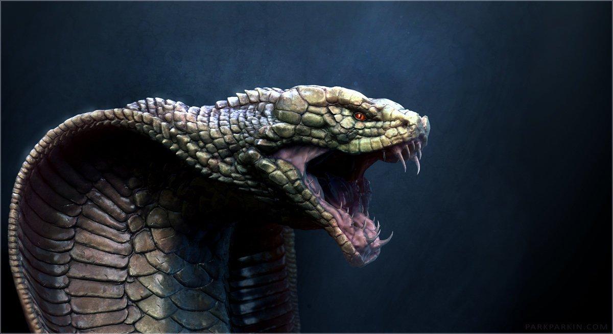 этого фото кобра обои на телефон морю зародилось душе