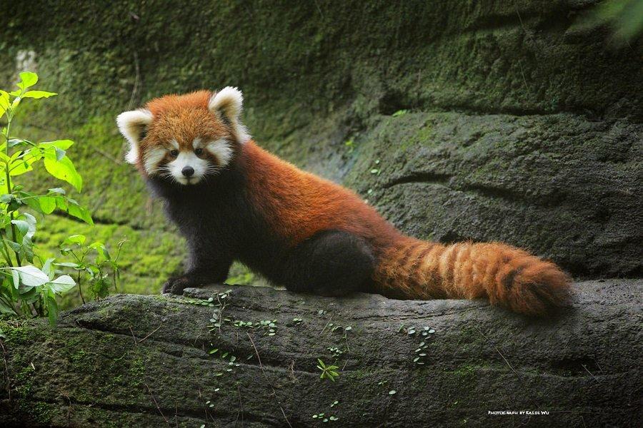 Животные в китае фото с названиями