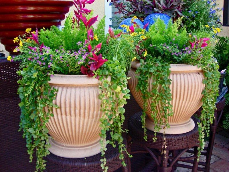 цветы для уличных вазонов стримы места событий
