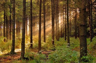 Фото лес скачать.