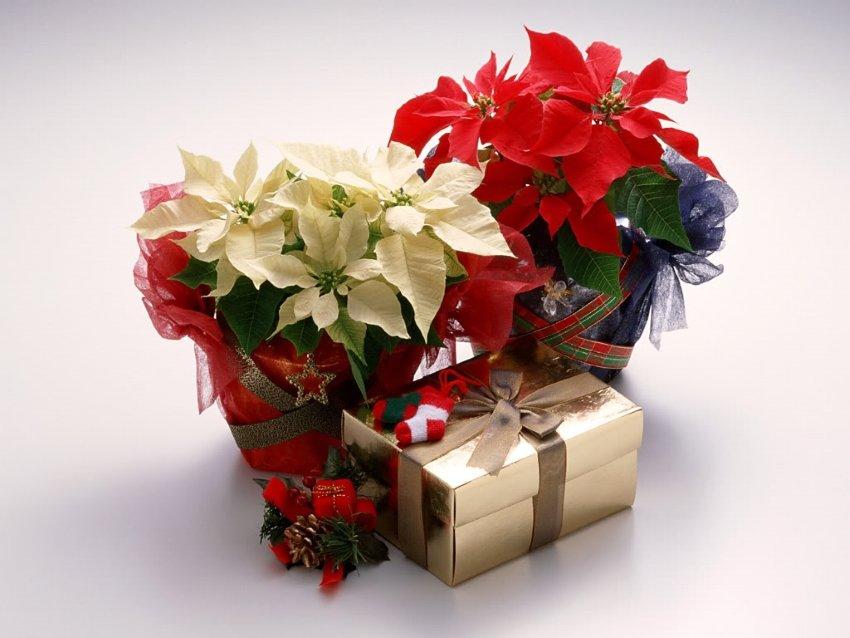 Поздравления, цветы новогодние картинки