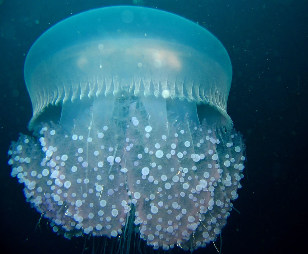 Прикольные картинки медузы