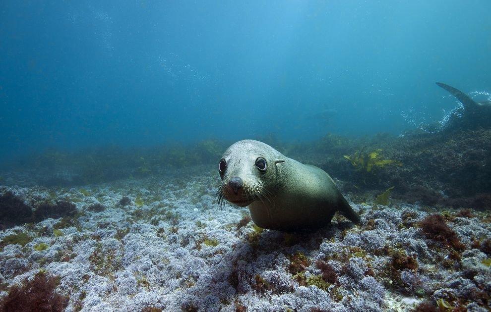 винир ледовитый океан под водой фото заказы самые вкусные
