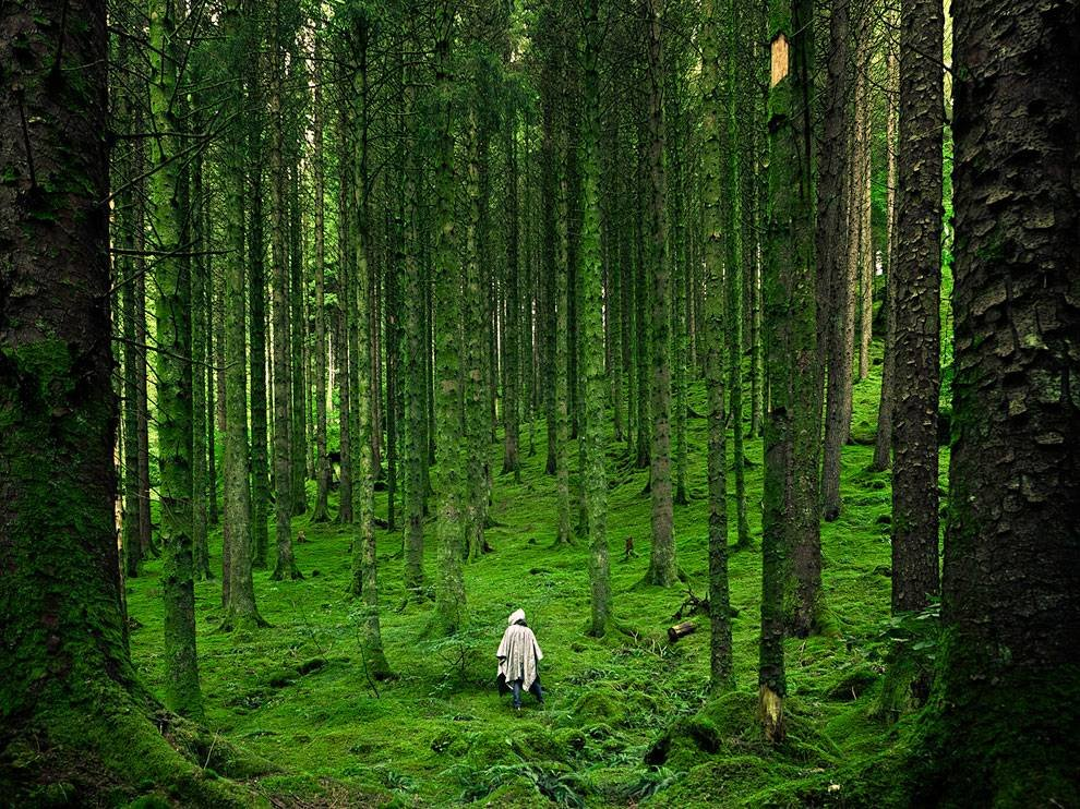 Смешные картинки леса