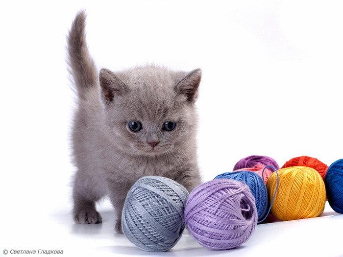 Котенок и клубочки