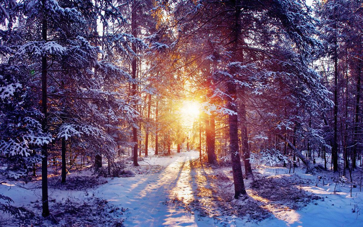 Днем рождения, картинка зима в лесу