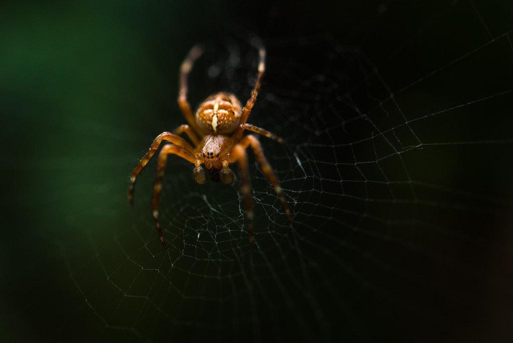 отеля представляет паук большой на паутине фото если
