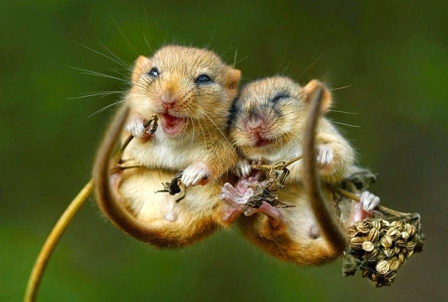 Смешные картинки о любви с животными