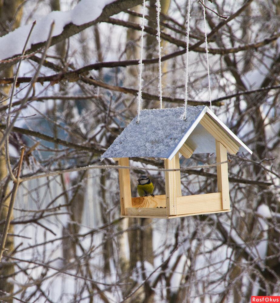 картинки кормушек зимних кормушек для птиц лучших