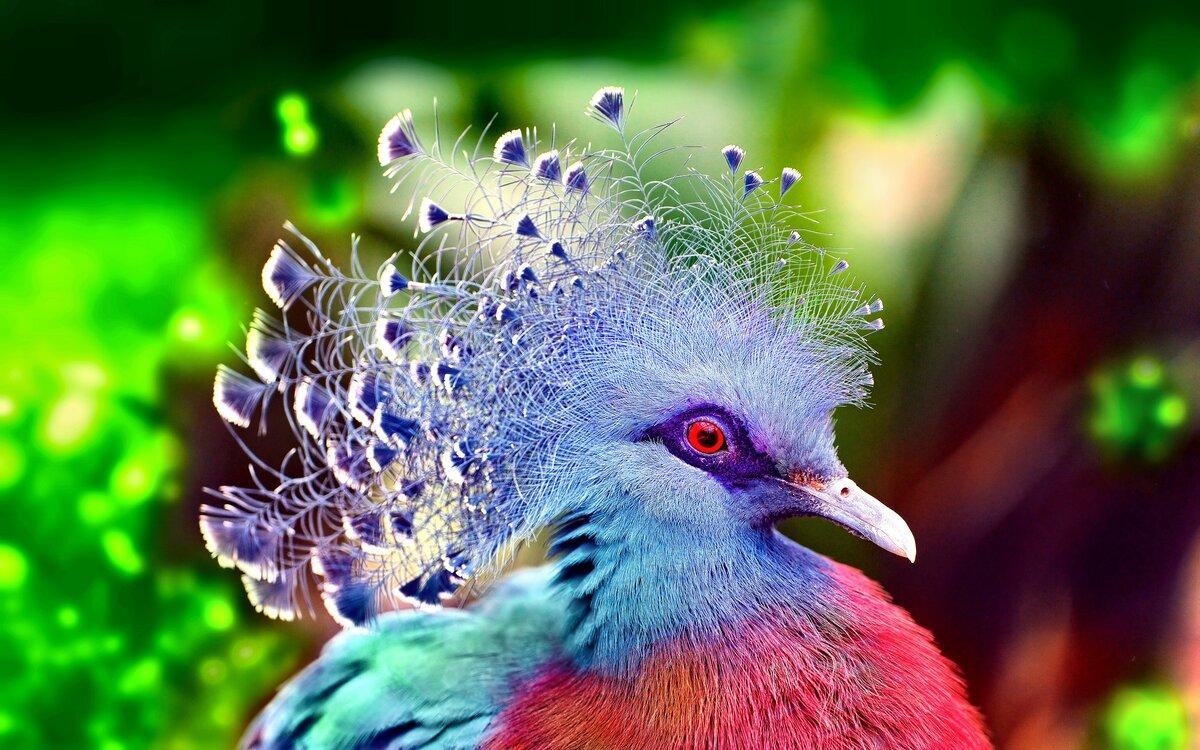 мой мир фото птиц африканского