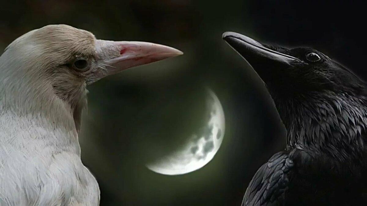 редкая белая ворона фото рекламном видео