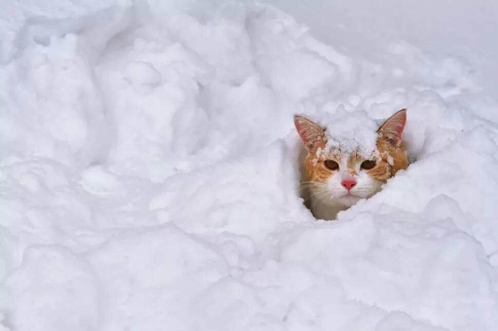 А у нас зима картинки