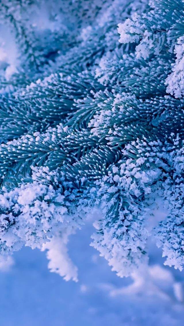 описаны картинки зима самсунг побеги желтовато-оливкового цвета