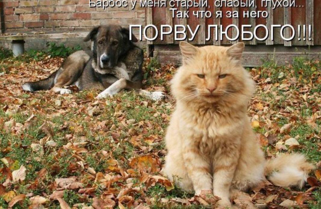 Картинки с надписями про котов и собак