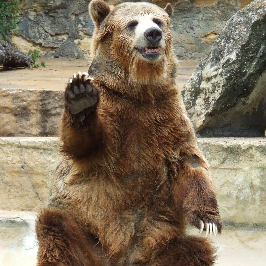 картинка медведь машет лапой поддержит регионы