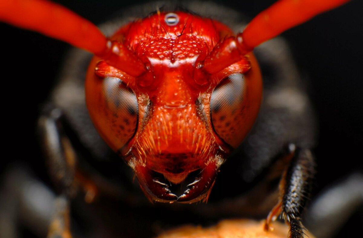 Картинки насекомых самых опасных
