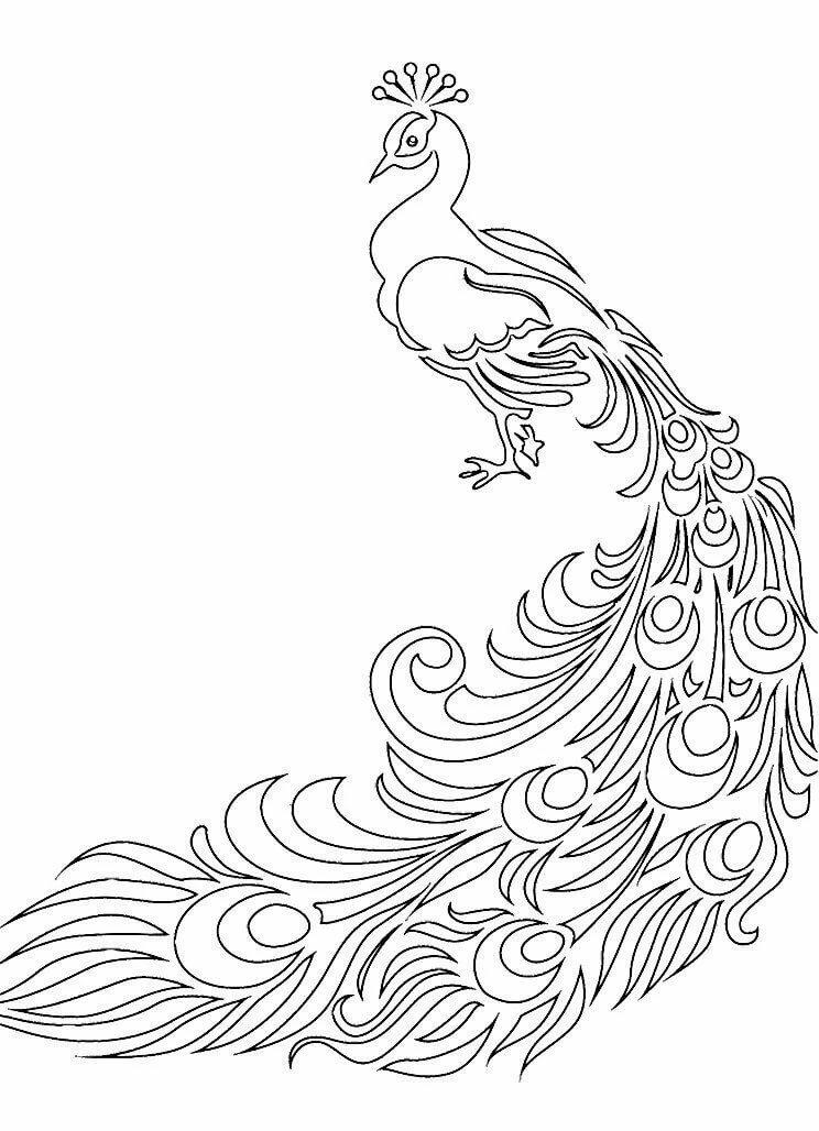 жар-птица без хвоста картинки раскраски своего