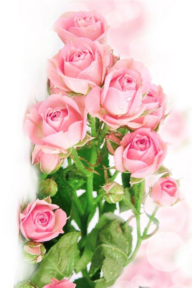 Обои на айфон розовые цветы вертикальные