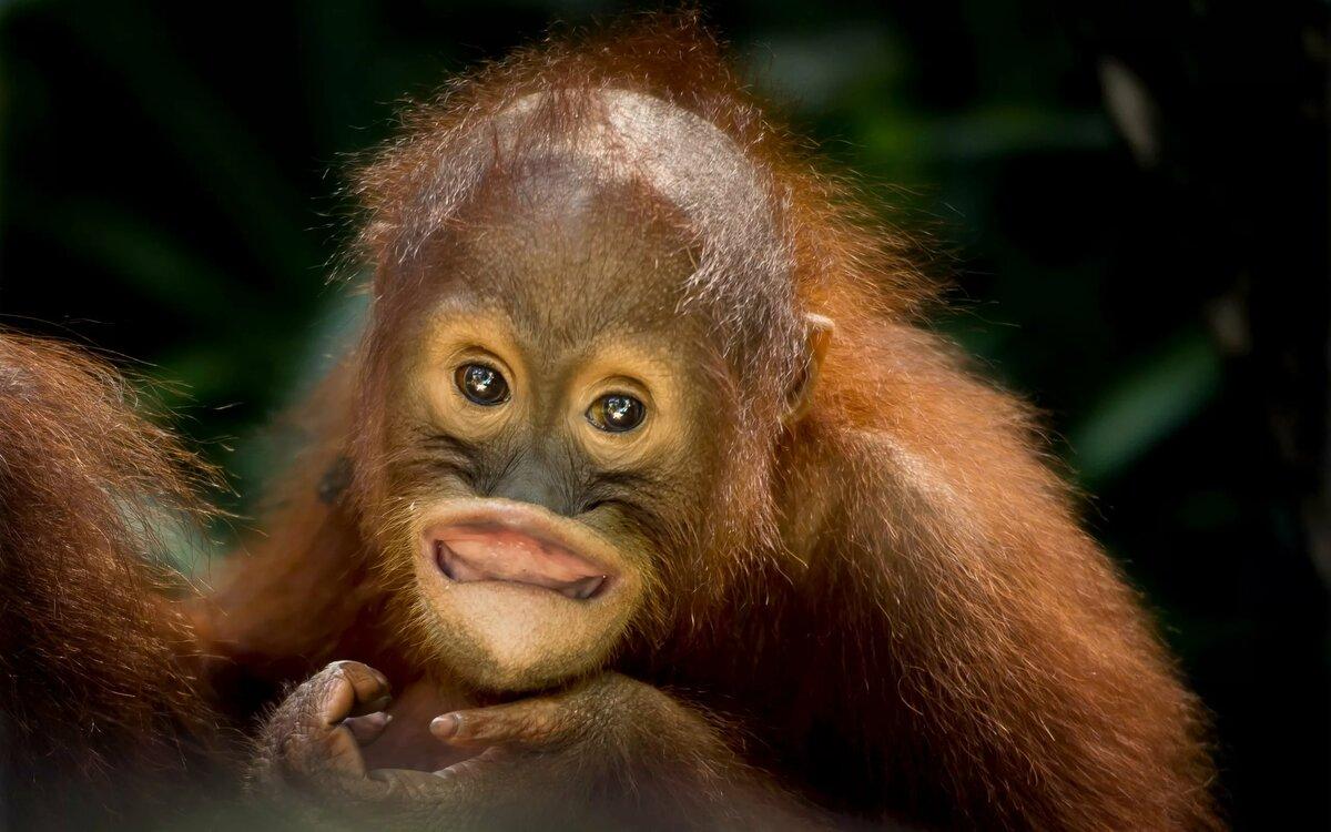 картинка обезьянка в мире обладательниц такой формы