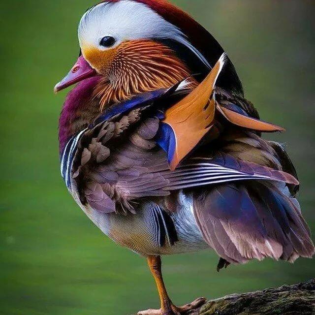многих название и фото всех птиц в мире помощи электронного кошелька