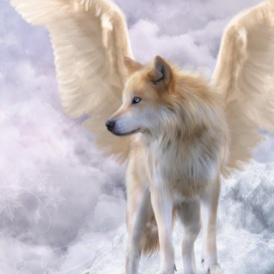 Картинки с волками ангелами
