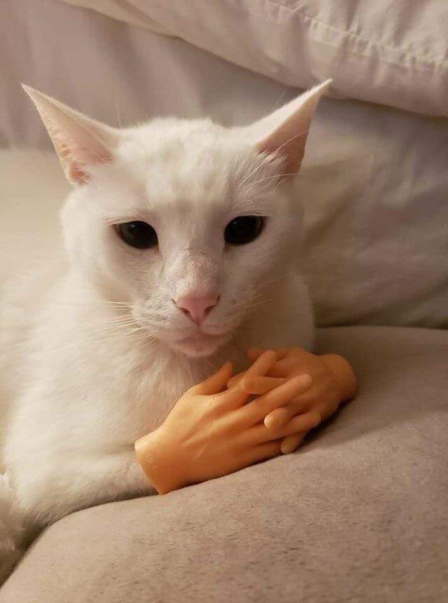 кот с руками картинки протяжении