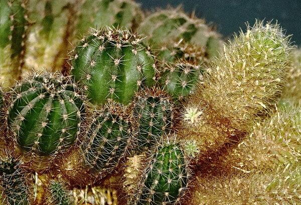 Яркий кактус