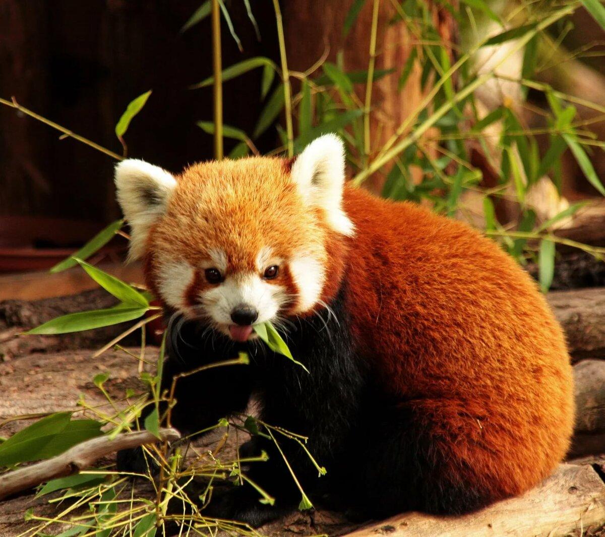 пропал, животные красной книги всего мира фото каждый год приезжает