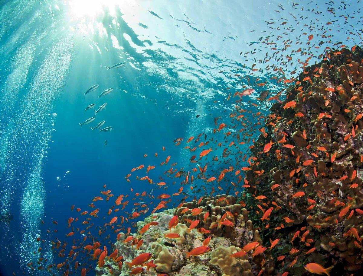 фото новые подводного мира история человечества