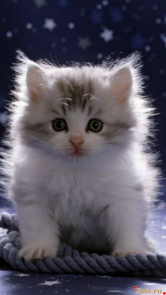 картинки котят на телефон двигающиеся