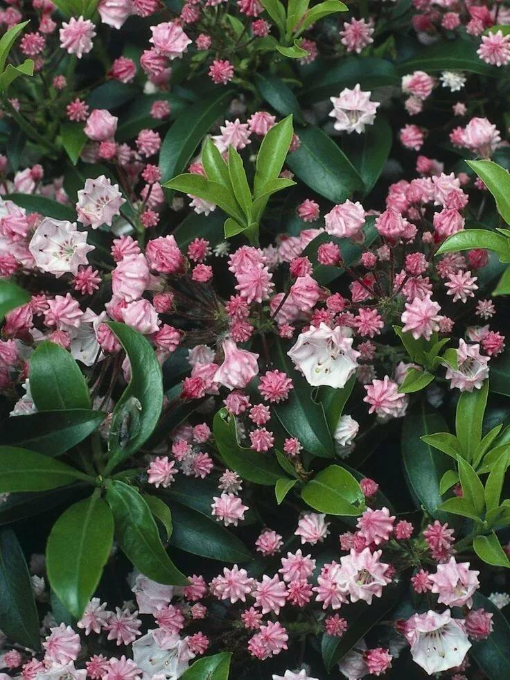 цветы любящие тень и влагу фото ряда испытаний