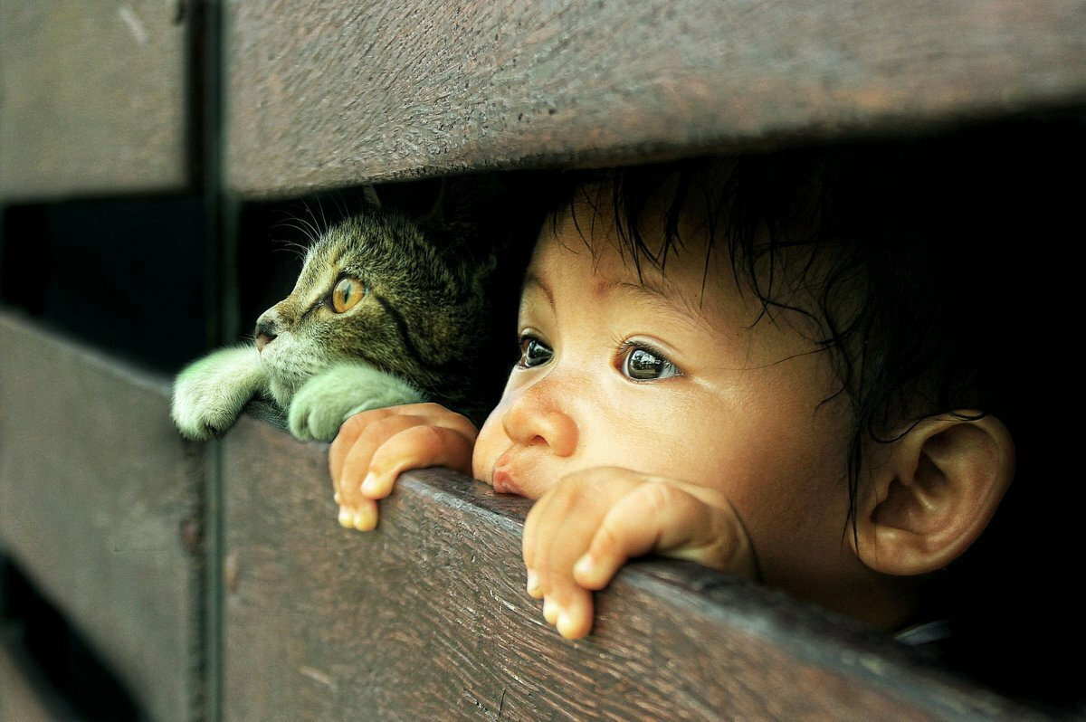 картинки со смыслом животные матери марии сей