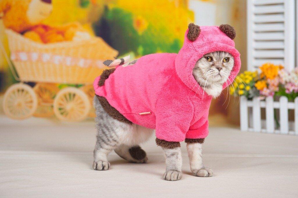 Картинки котики в одежде