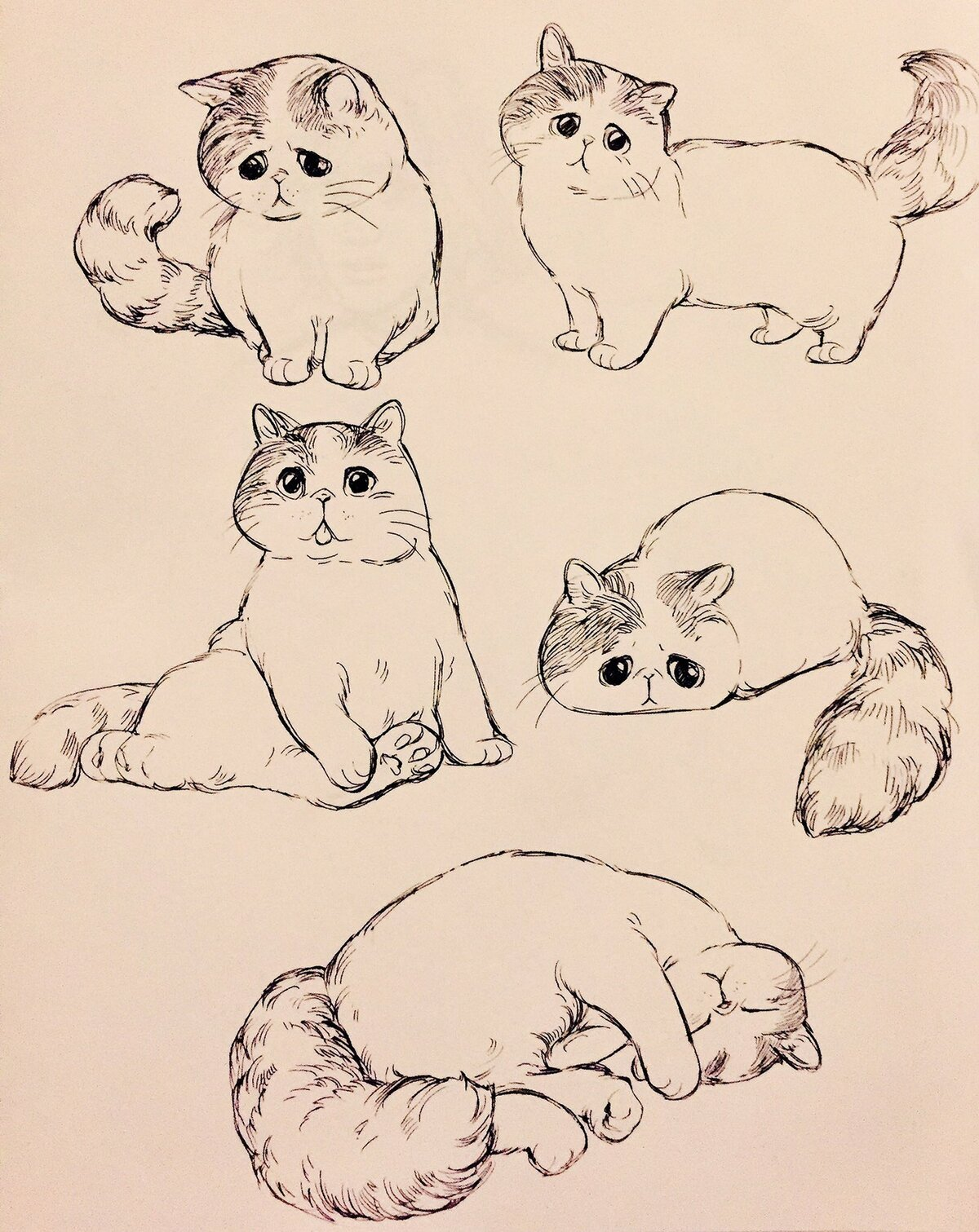этому нарисовать смешного кота поэтапно того чтобы отдых