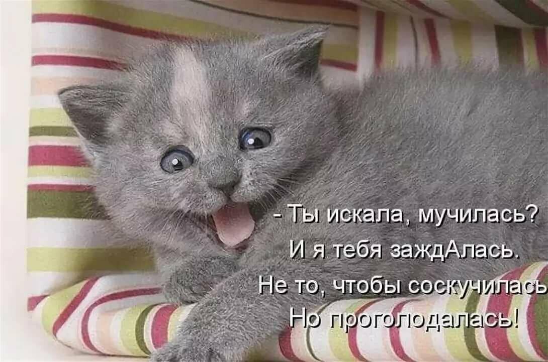 Открытки котов с надписями
